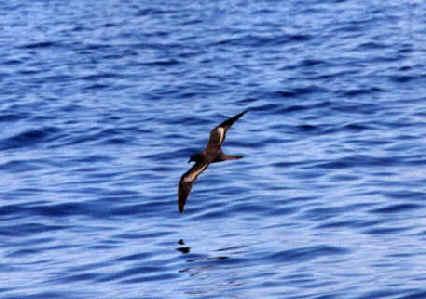 Birdlife Canary Islands