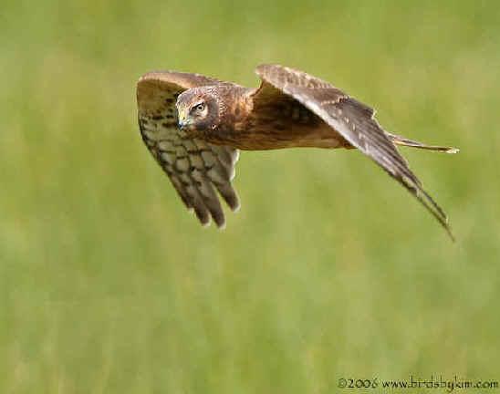 http://www.focusonnature.com/BirdLi394.jpg