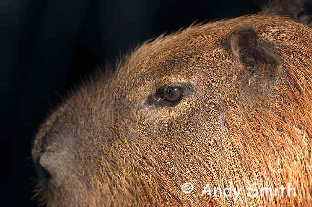 Mammals and Other Wildlife in South America during Focus