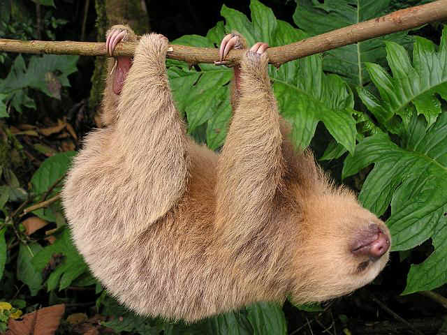 Costa Rica Mammals and Other Wildlife during Focus On