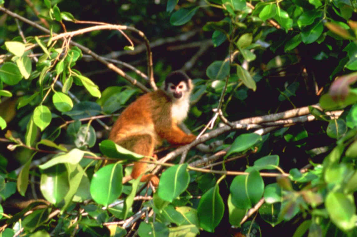 Mammals in Central America during Focus On Nature Tours