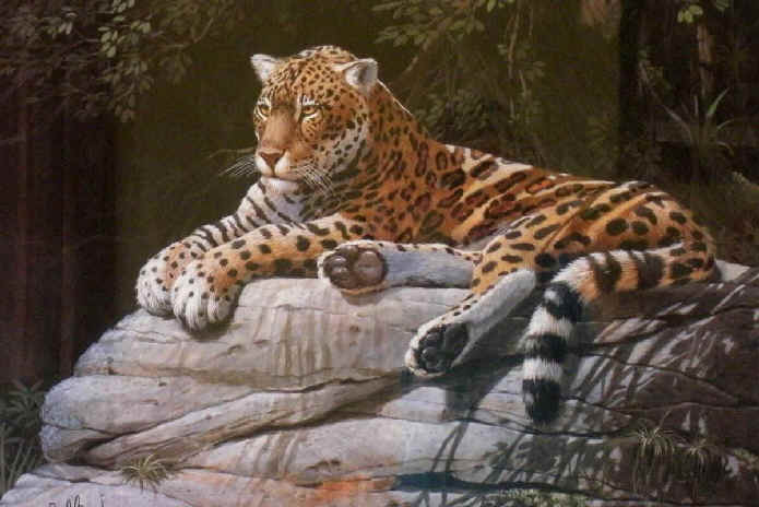 Threatened Mammals : Species protected | Mammals'Planet