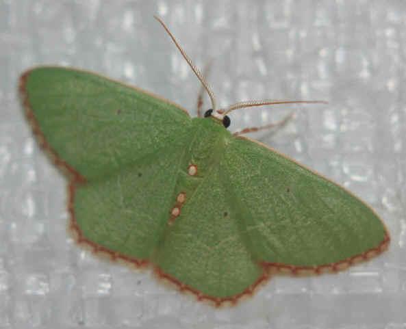' ' from the web at 'http://www.focusonnature.com/MothsO100.jpg'