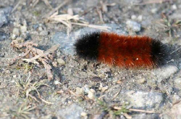 ' ' from the web at 'http://www.focusonnature.com/MothsO15.jpg'