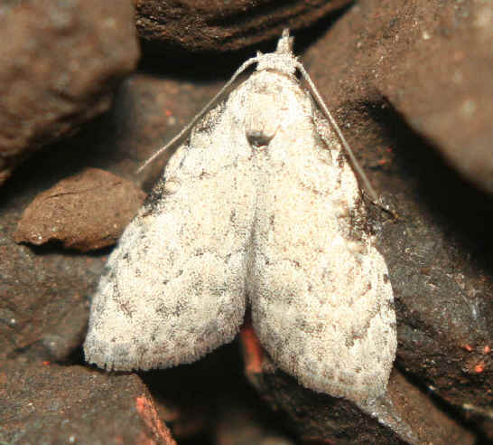 ' ' from the web at 'http://www.focusonnature.com/MothsO150.jpg'