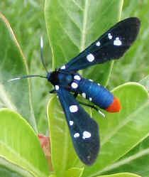 ' ' from the web at 'http://www.focusonnature.com/MothsO193.jpg'