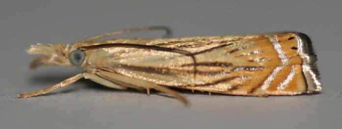 ' ' from the web at 'http://www.focusonnature.com/MothsO87.jpg'