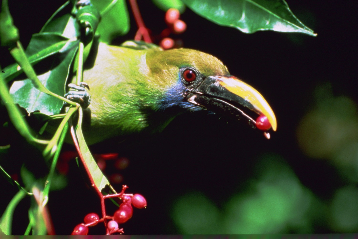 Names of Tropical Birds Tropical Birds Names And