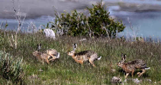 Mammals in Eastern North America during Focus On Nature Tours